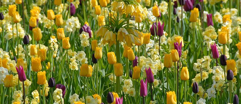 Bereid je huid voor op de lente