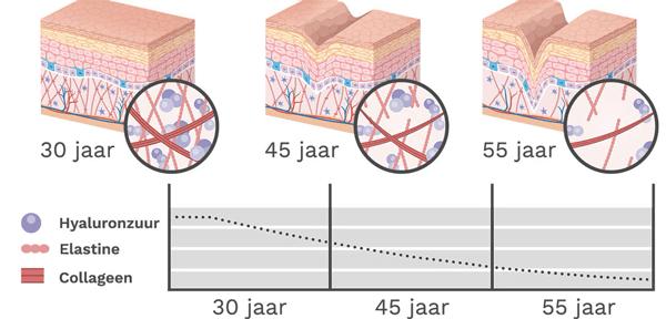 Hyaluronzuur - Elastine - Collageen